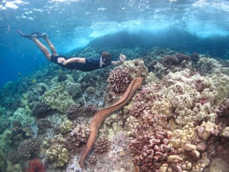 Snorkeling Tours - 2641