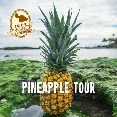 Pineapple supplies in Maui 432