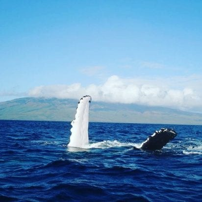 Whale watch on Maui 256