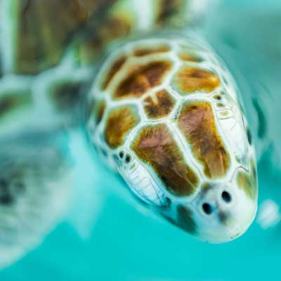 Maui Calypso snorkel tour 39