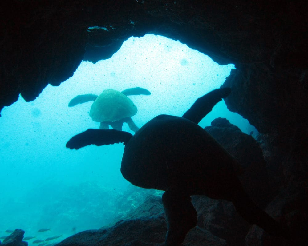 Scuba tours in Maui - 2125