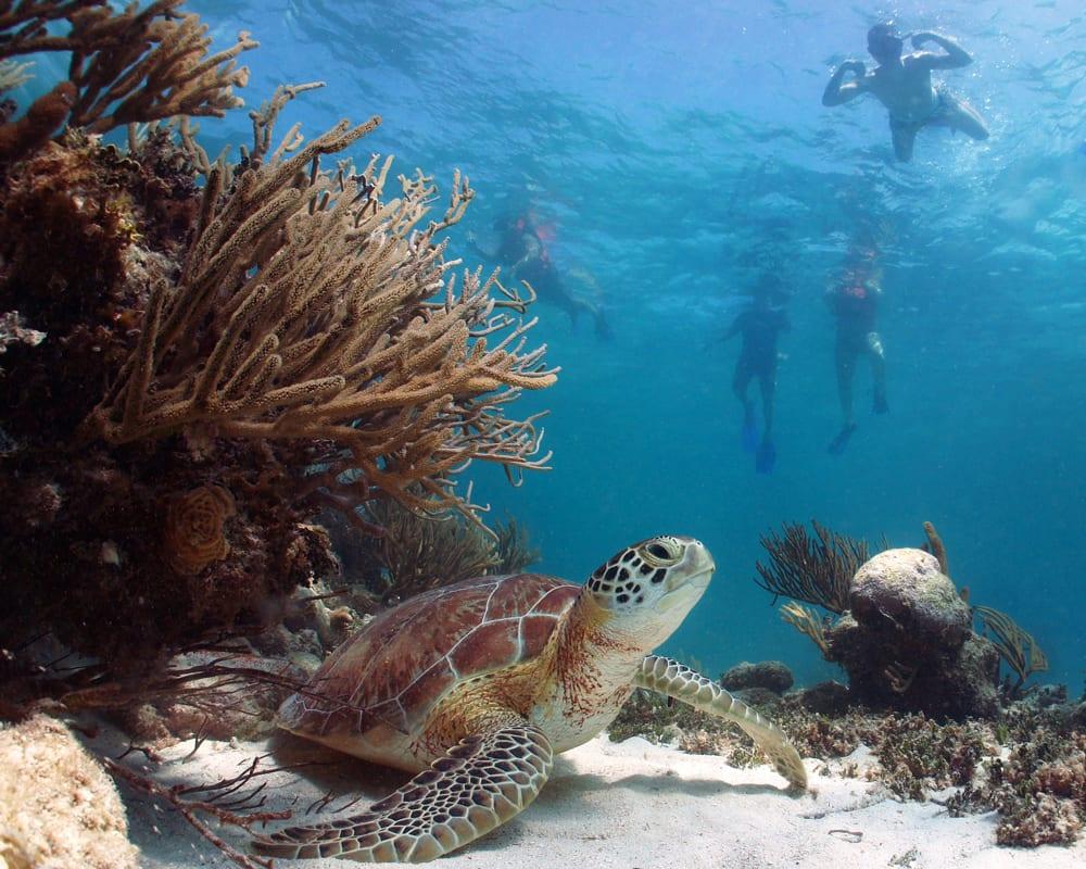 Turtle Town Maui Hawaii - 2171
