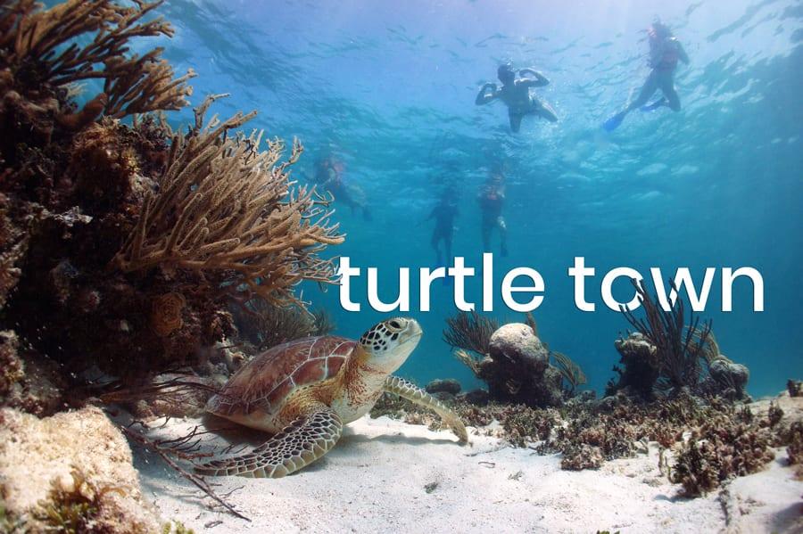 Maui Turtle Town