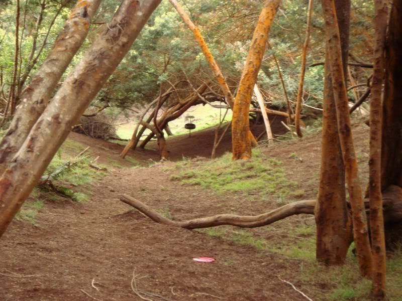 Maui Things to Do Disc Golf