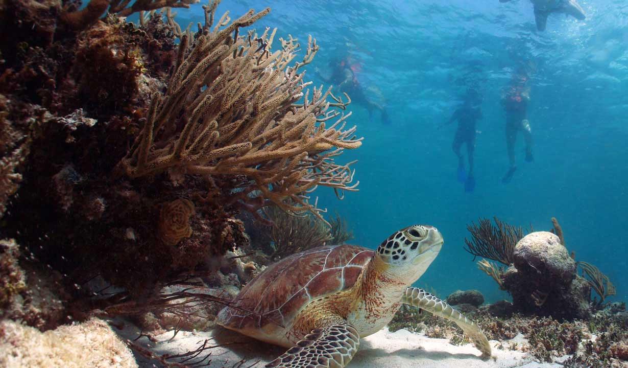 Maui Snorkeling Activities 58