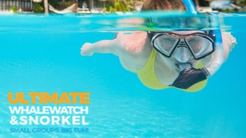 Maui Snorkel Trips