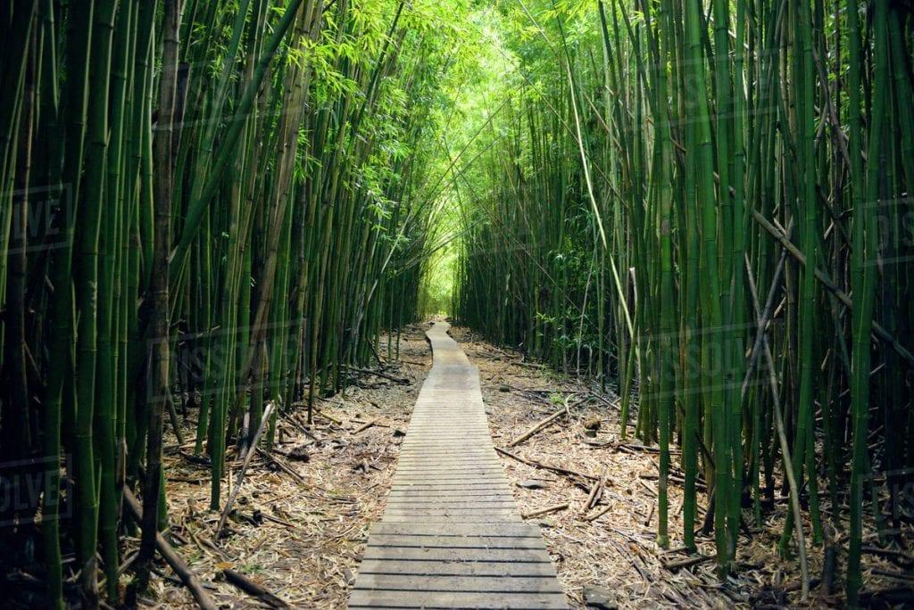 Pipiwai Trail – Road to Hana Guide