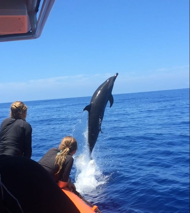 jumping dolphin image