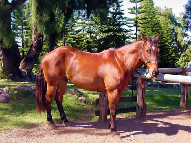 Ironwood Ranch Horse Photo